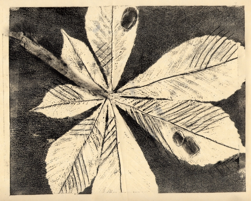 Monotype_Feuille